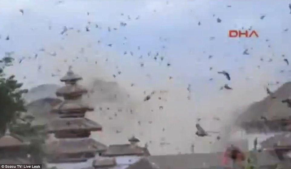 Las aves también vivieron el terremoto en Nepal (+Video)