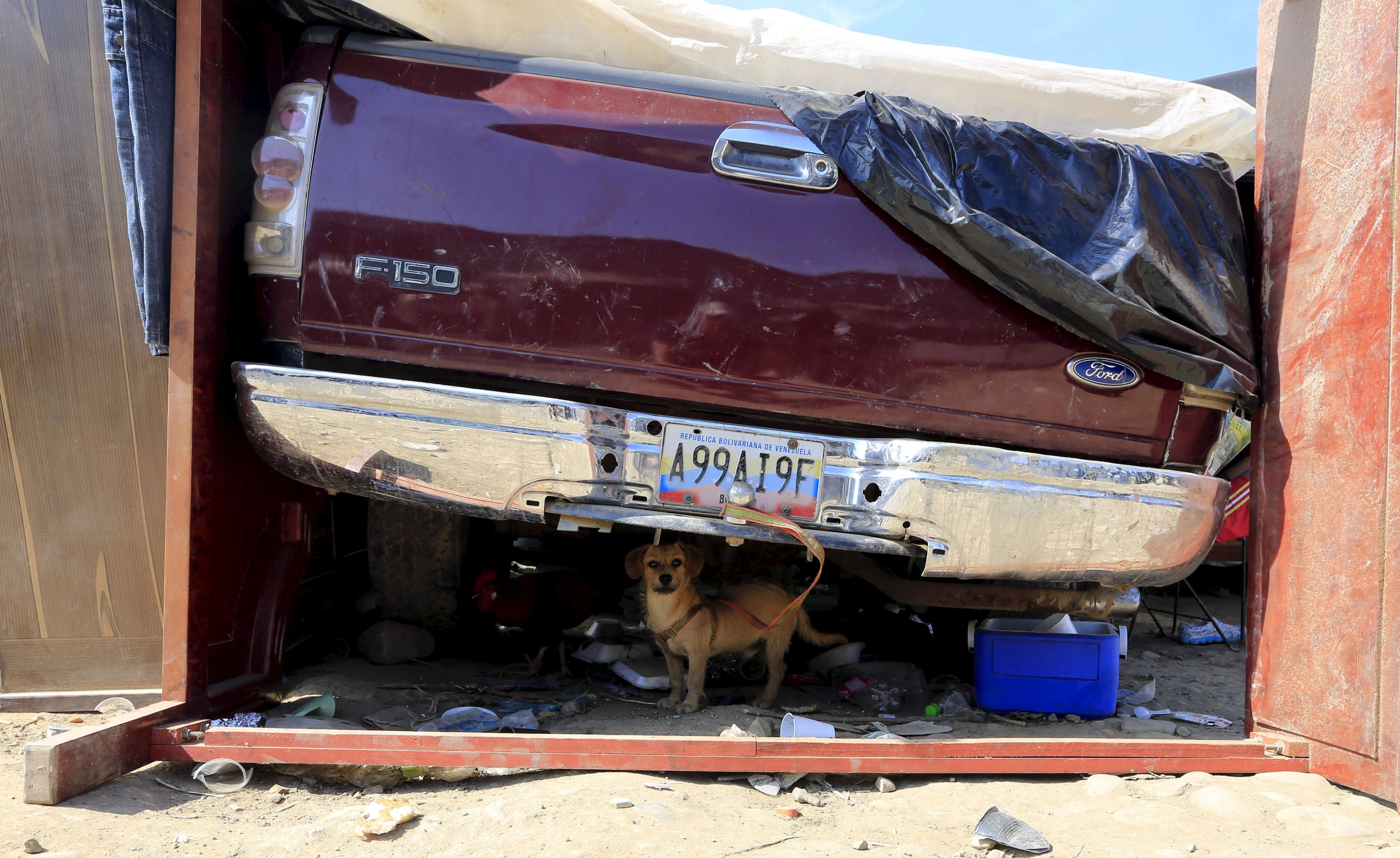 A dog stands under a car in a temporary shelter where its owner has been living temporarily, near the Colombian village of Villa del Rosario, close to the border with Venezuela August 27, 2015. Venezuela closed two border crossings last week and began deporting hundreds of Colombians, as part of measures the government says are designed to control smuggling and paramilitary activity. REUTERS/Jose Miguel Gomez