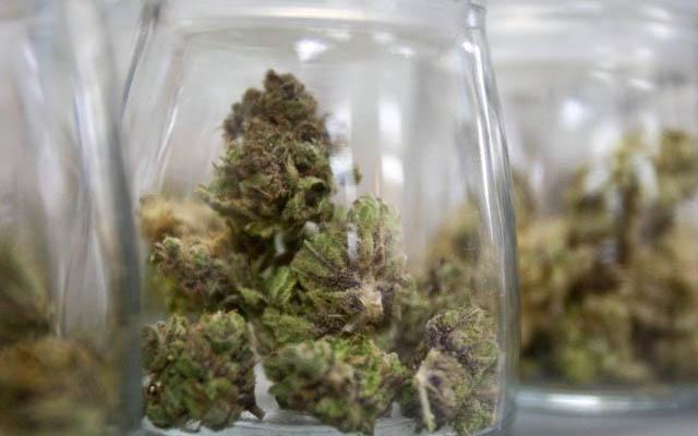 la-marihuana-legal-se-abre-paso-eeuu-donde-tendra-su-primer-resort