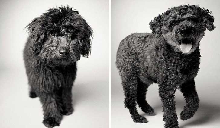 Rufus 6 meses y 13 años