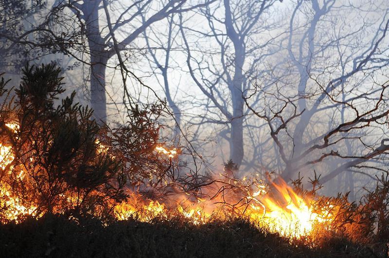 Fuego en los montes próximos a la localidad de Bárcena Mayor, Cantabria, comunidad con cerca de 80 incendios forestales declarados que ha activado esta madrugada el nivel 2 del INFOCANT, el plan de protección, lo que implica una situación de alerta máxima y la movilización de más medios externos para hacer frente a las llamas. EFE/Pedro Puente Hoyos