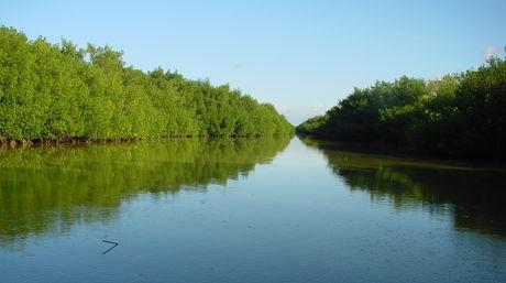 Resultado de imagen para Parque nacional Laguna de Tacarigua
