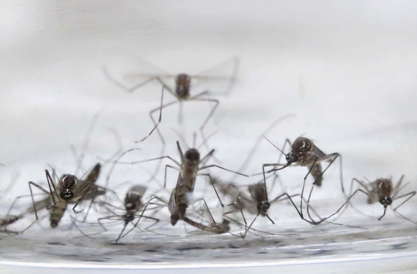 zika zancudo aedes