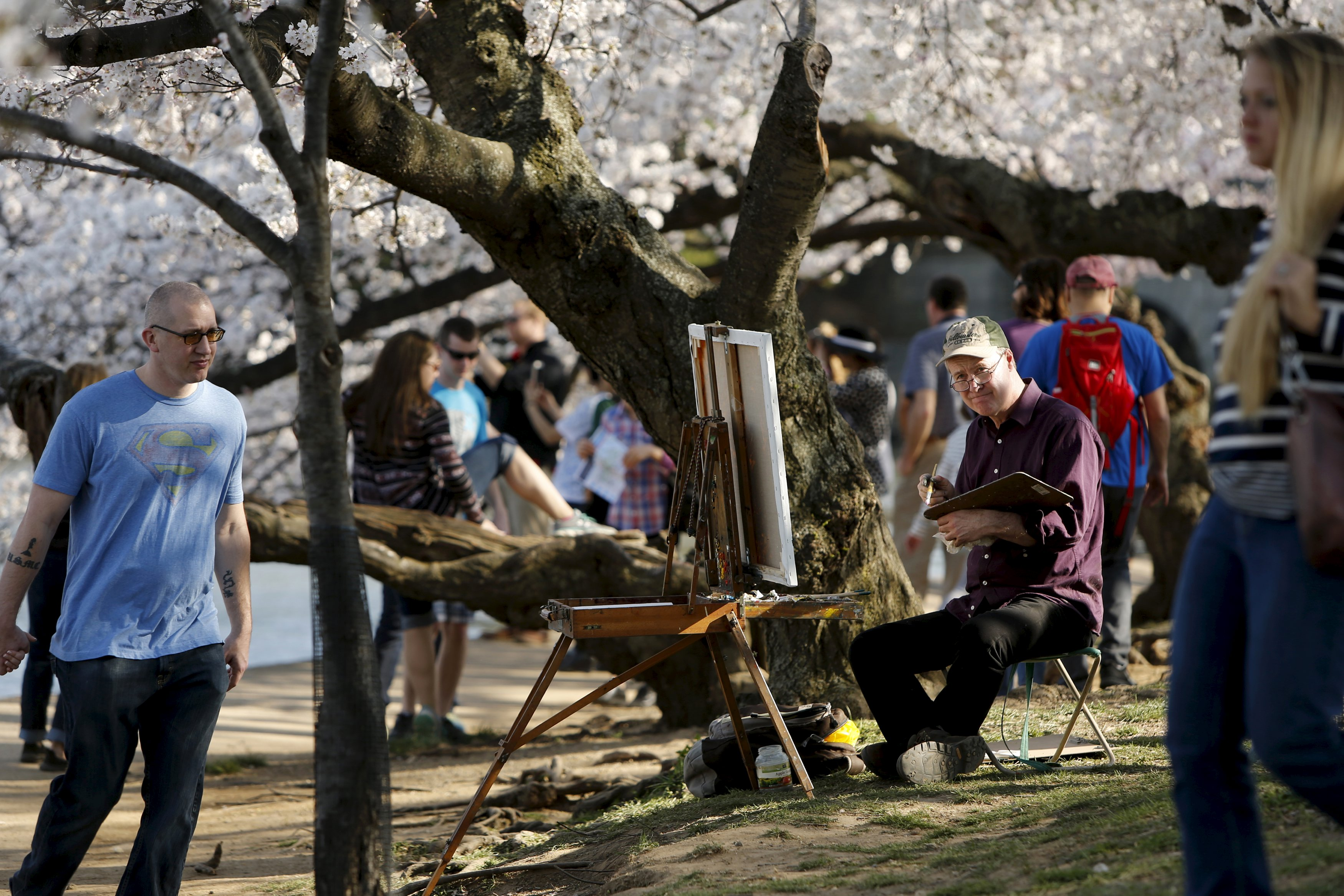 Cherry Blossoms: A Good Option for Picking Up Filipino Girls
