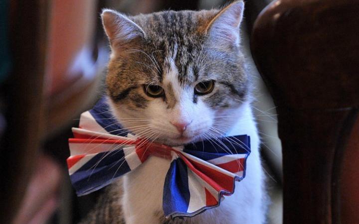 [Imagen: Palmerston.jpg]