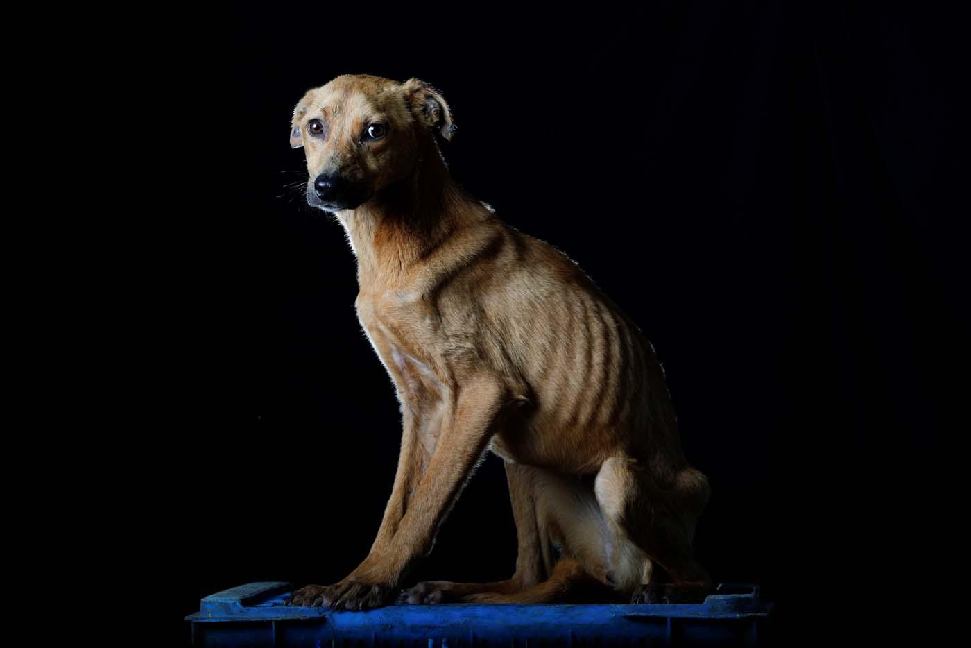 mascotas venezuela crisis