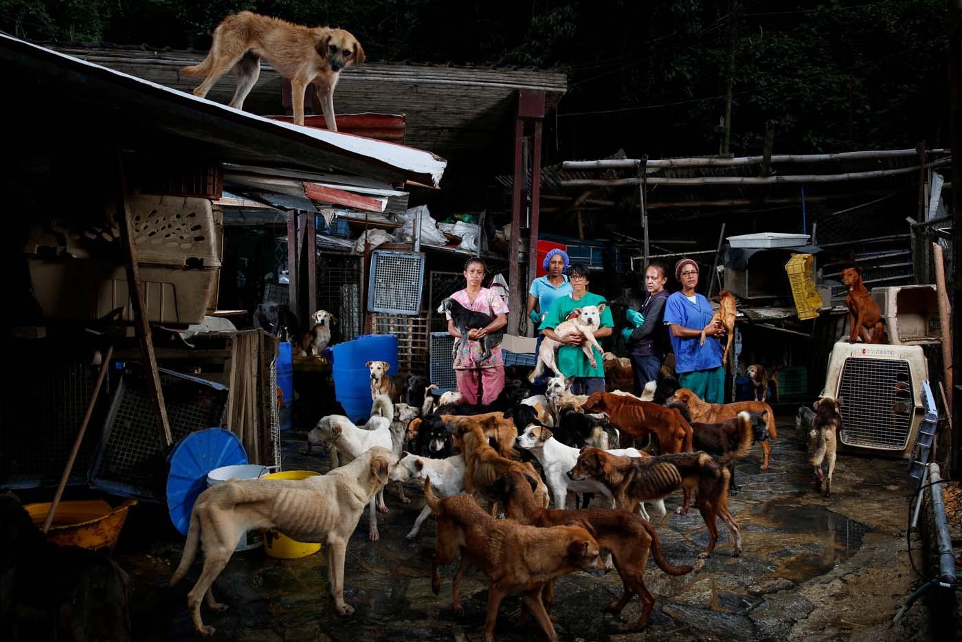 mascotas refugio crisis venezuela