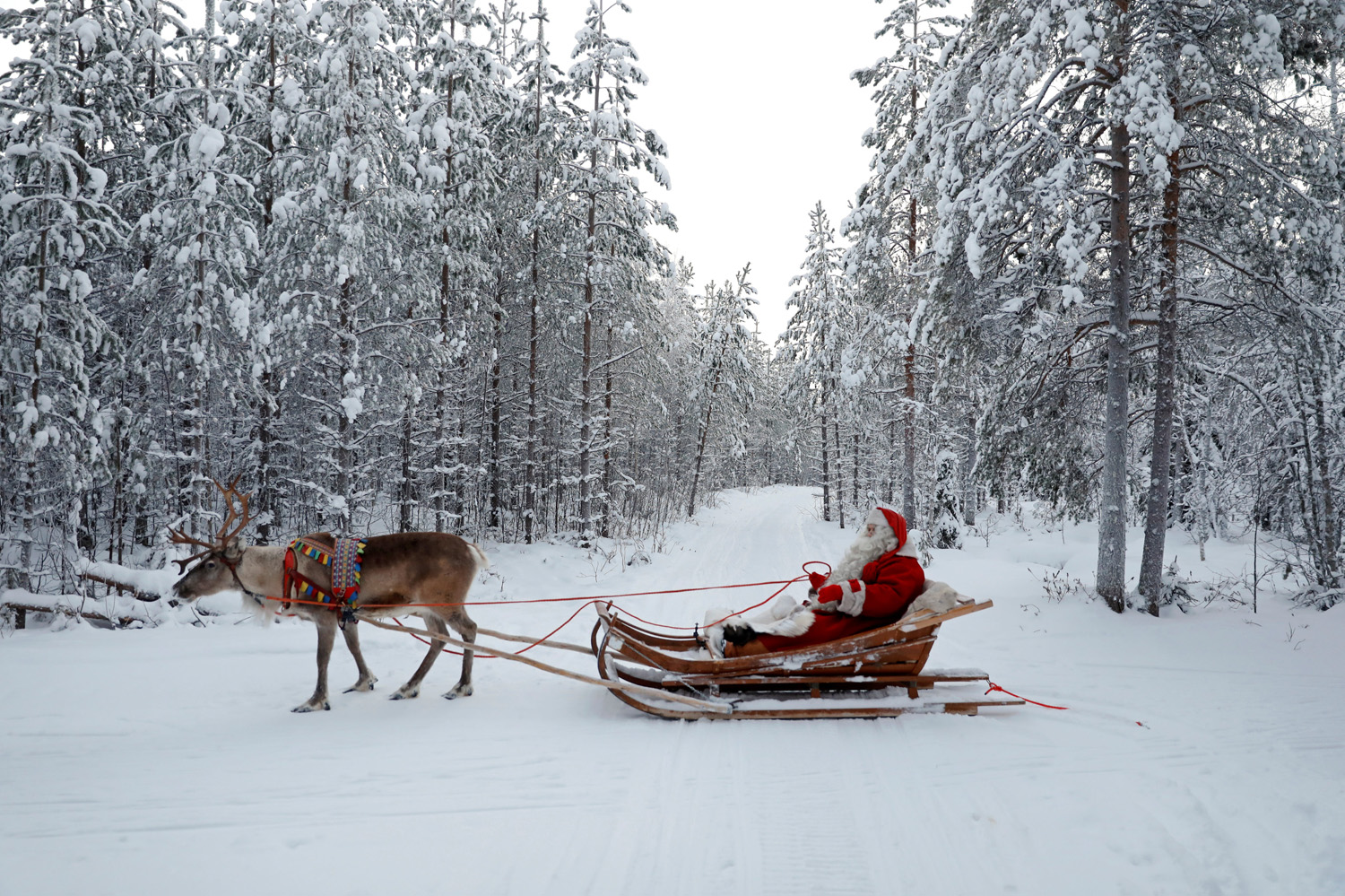 "Santa Claus rides in his sleigh as he prepares for Christmas in the Arctic Circle near Rovaniemi, Finland December 15, 2016. REUTERS/Pawel Kopczynski SEARCH ""KOPCZYNSKI SANTA"" FOR THIS STORY. SEARCH ""THE WIDER IMAGE"" FOR ALL STORIES"