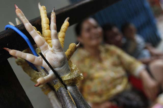 No se sorprenda al ver una placenta felina seca expuesta en algunas casas. Esta se mantiene porque trae buena suerte, creen los camboyanos. Tampoco hay que asombrarse al ver murciélagos, serpientes y lagartijas secas en las farmacias tradicionales.