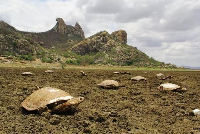 [Image: hugo-tortugas-cementerio-brasil-1-min.jpg]