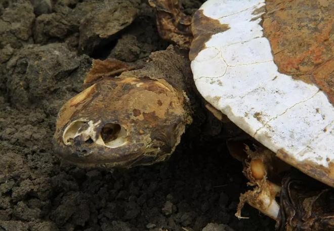 [Image: hugo-tortugas-cementerio-brasil-2-min.jpg]