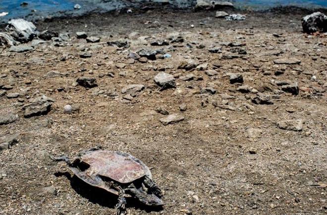 [Image: tortugas-cementerio-brasil-1-min.jpg]