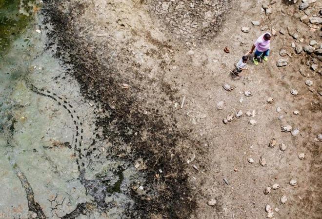 [Image: tortugas-cementerio-brasil-2-min.jpg]