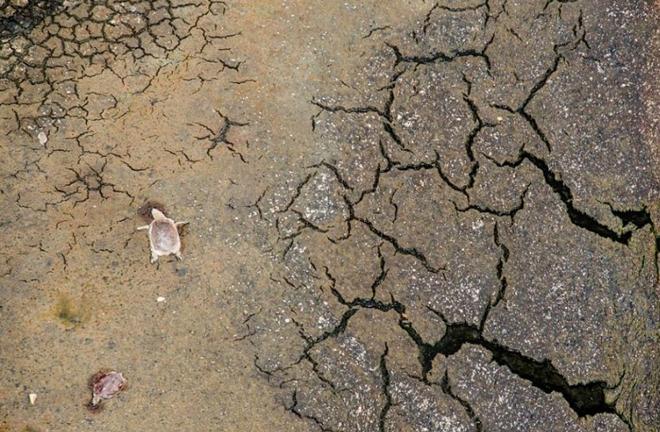 [Image: tortugas-cementerio-brasil-3-min.jpg]