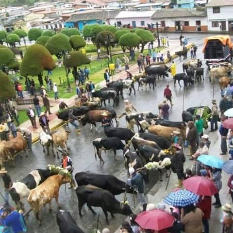 Vacas Mérida Plantón 15May