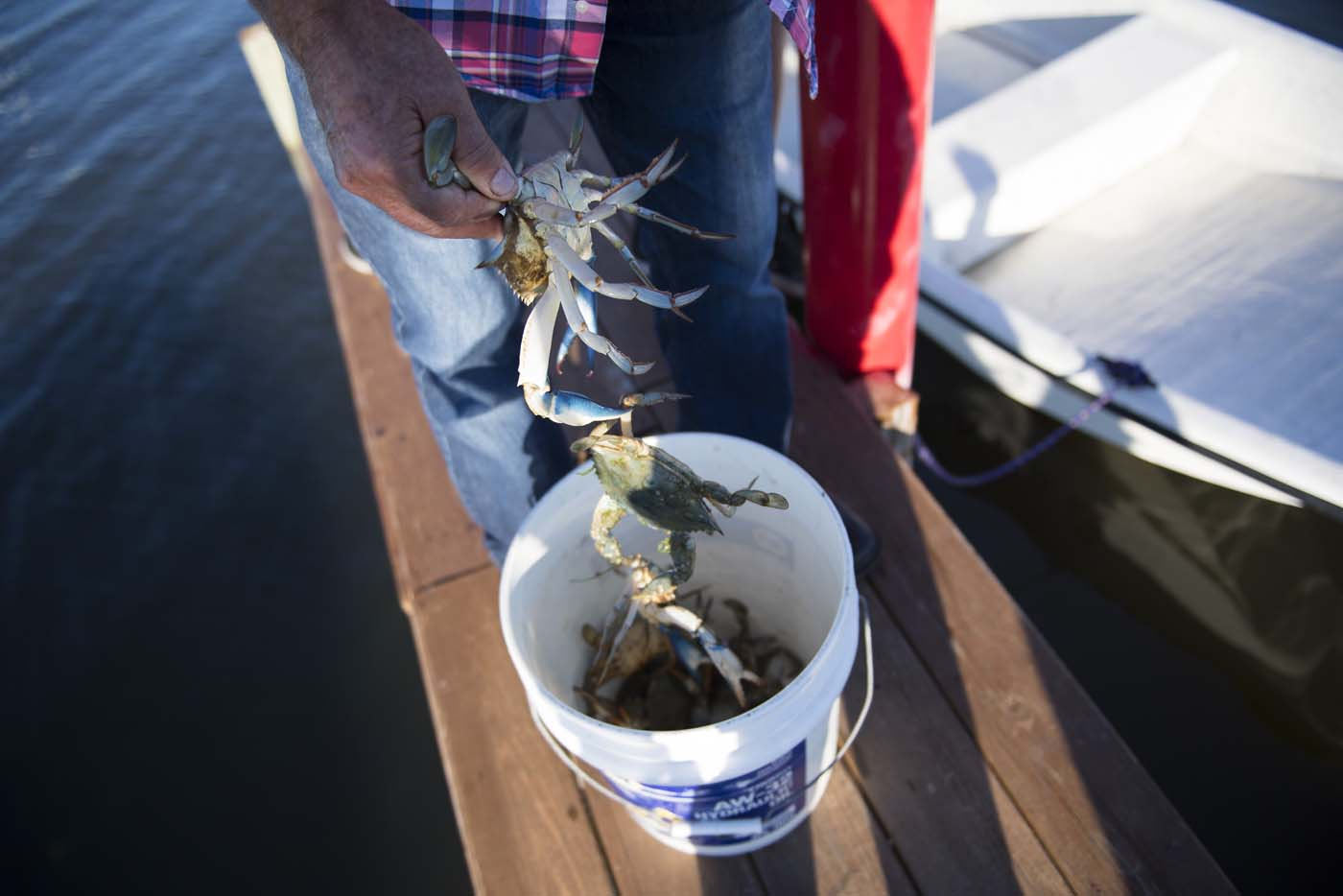 William Eskridge pulls just caught crabs from a bucket in Tangier, Virginia, May 15, 2017, where climate change and rising sea levels threaten the inhabitants of the slowly sinking island. Now measuring 1.2 square miles, Tangier Island has lost two-thirds of its landmass since 1850. If nothing is done to stop the erosion, it may disappear completely in the next 40 years. / AFP PHOTO / JIM WATSON