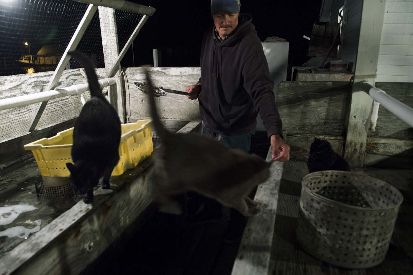 Mayor and waterman James Eskridge feeds his cats as he checks on his soft shell crabs at his shanty during the early morning in Tangier, Virginia, May 16, 2017, where climate change and rising sea levels threaten the inhabitants of the slowly sinking island. Now measuring 1.2 square miles, Tangier Island has lost two-thirds of its landmass since 1850. If nothing is done to stop the erosion, it may disappear completely in the next 40 years. / AFP PHOTO / JIM WATSON