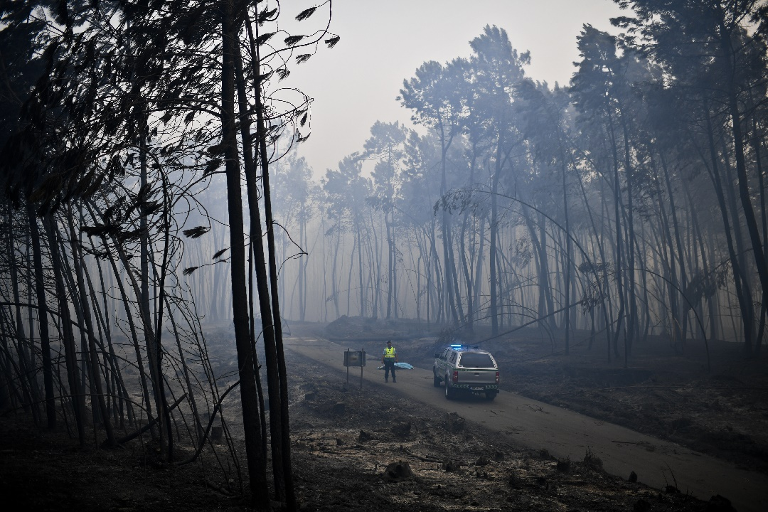 A policeman stands by a dead body of a victim of a wildfire in Pedrogao, on June 18, 2017. A wildfire in central Portugal killed at least 57 people and injured 59 others, most of them burning to death in their cars, the government said on June 18, 2017. Several hundred firefighters and 160 vehicles were dispatched late on June 17 to tackle the blaze, which broke out in the afternoon in the municipality of Pedrogao Grande before spreading fast across several fronts. / AFP PHOTO / PATRICIA DE MELO MOREIRA