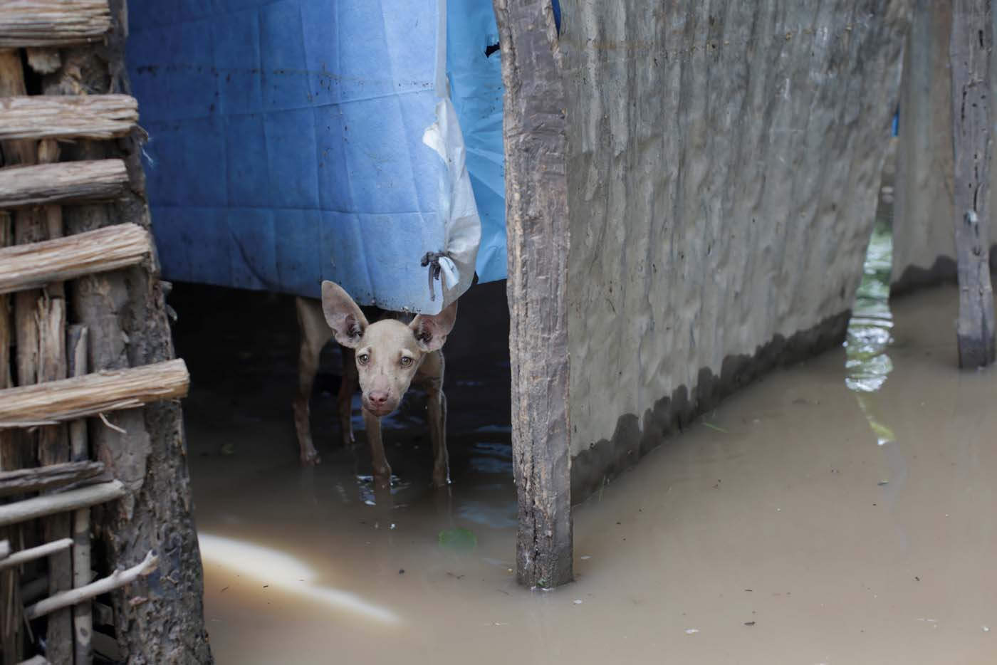 A pup stands in flood waters after hurricane Irma in Fort Liberte, Haiti September 8, 2017. REUTERS/Andres Martinez Casares