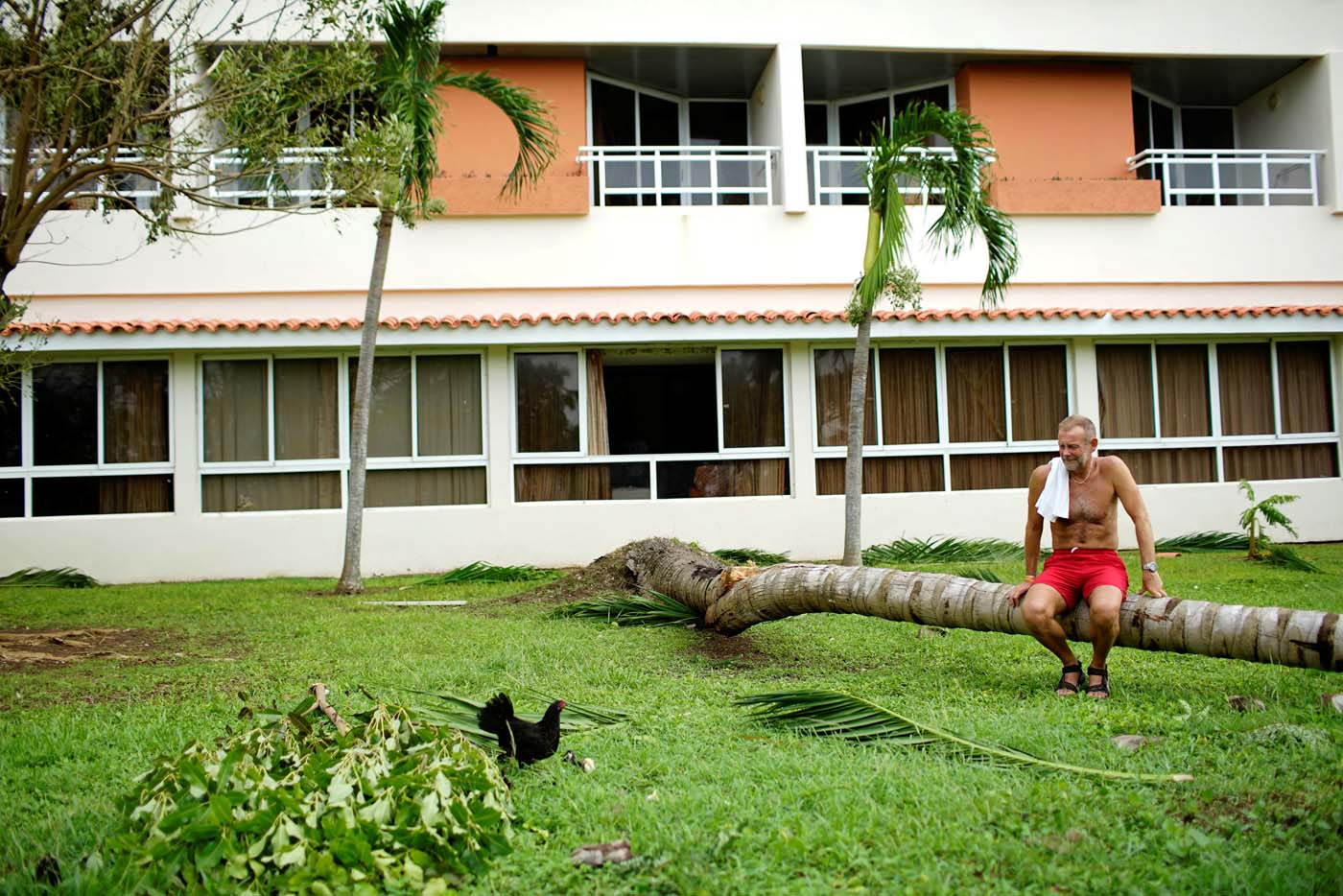 British tourist Terry Gill watches a chicken and its chicks as he rests on a broken palm tree a day after the passage of Hurricane Irma in Varadero, Cuba, September 10, 2017. REUTERS/Alexandre Meneghini