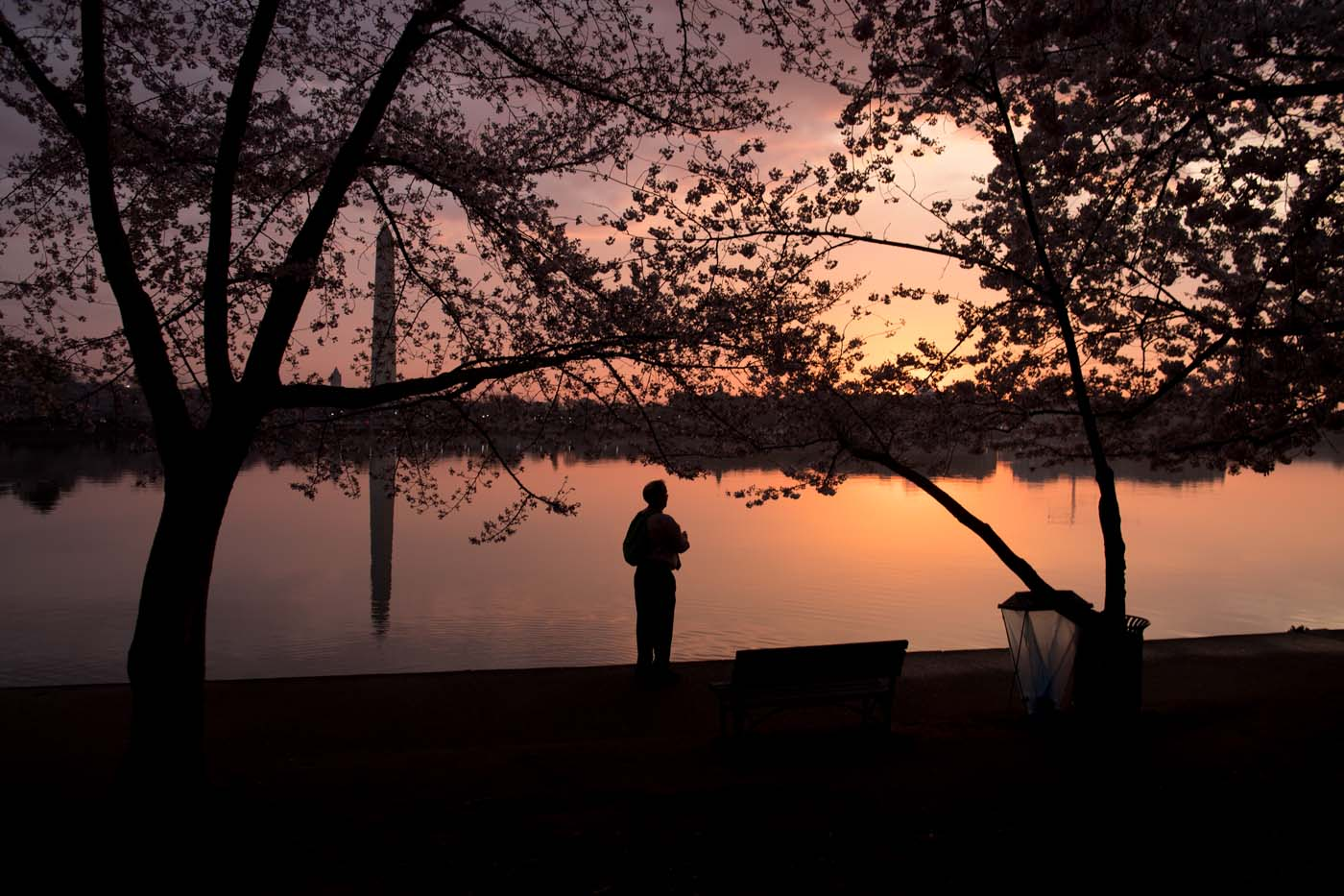 A man photographs the Cherry Blossom trees as they bloom around the Tidal Basin at sunrise in Washington, DC, April 4, 2018. / AFP PHOTO / SAUL LOEB
