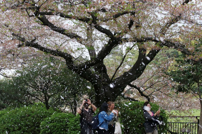 La gente filma una lluvia de flores de cerezo en un parque en Tokio, Japón, el 2 de abril de 2018. REUTERS / Toru Hanai