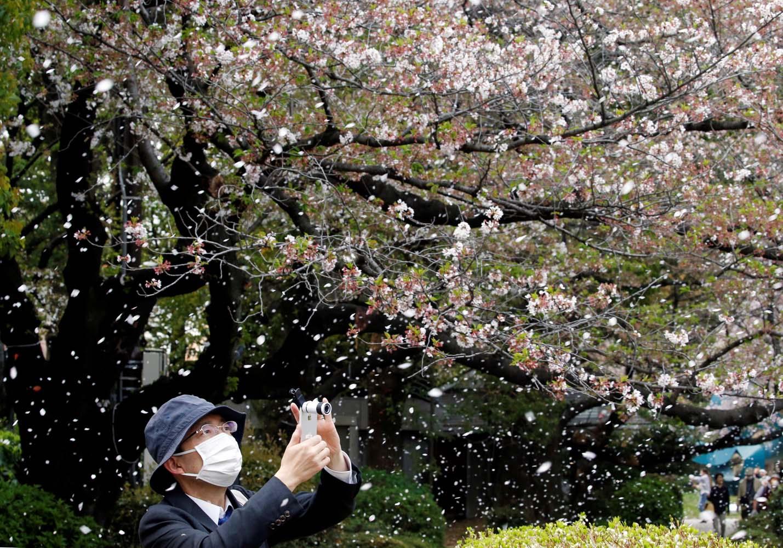 Un hombre filma una lluvia de flores de cerezo en un parque en Tokio, Japón, el 2 de abril de 2018. REUTERS / Toru Hanai