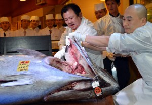 Pescaron un atún de ¡222 kilos! (Fotos + Sushi)