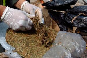 GNB incautó 465 panelas de marihuana en Lara