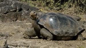 Eliminan las ratas en las islas Galápagos (Video)