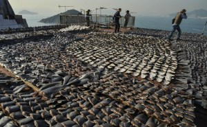 Indignación por estas imágenes de cientos de tiburones masacrados en China (FOTOS)
