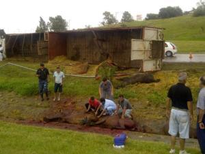 Al menos diez caballos muertos en accidente de tránsito en Argentina (Foto)