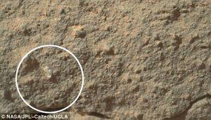 Encontraron una flor en Marte (Foto)