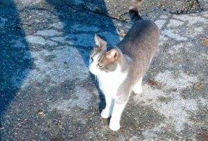 Un gato desconsolado vuelve cada día a la tumba de su amo