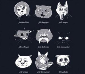 5 cosas que ocurrirían si todos los gatos desaparecieran de repente