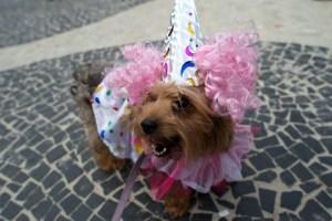 Carnaval canino iluminó las calles de Río de Janeiro (Fotos)