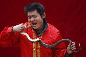 El sorprendente acto de un chino tragándose una serpiente (Fotos)