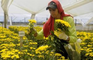 Millones de flores para los enamorados de todo el mundo (Fotos)