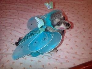 Los disfraces de las mascotas este #Carnaval2013
