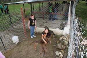 Mascotas en situación de calle tienen un refugio en Chacao (Fotos)