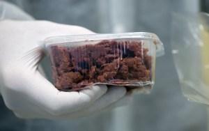 Descubiertos en Rumania 100 kilos de carne de caballo con etiqueta de carne de vacuno