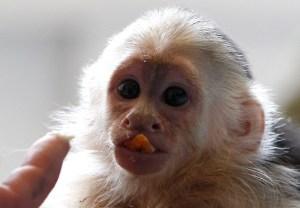 El mono de Justin Bieber (Fotos)