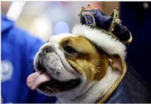 """Este bulldog fue coronado como el """"perro del año"""" (Fotos+guau)"""