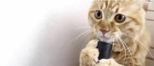 Un lindo gatito se deja succionar por una aspiradora (Foto + Video)