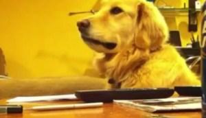 Conozca al perro caprilista (Video)