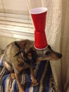 Este es el candidato canino para el Cirque du Soleil (Fotos+guau)