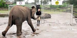 Elefante pronostica al próximo ganador de la Champions (Video)