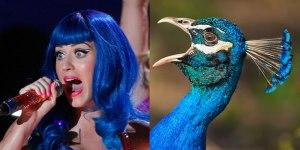 Si los famosos fueran aves (Fotos)