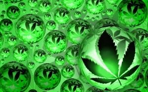 Oposición uruguaya pedirá un referéndum si se legaliza la marihuana