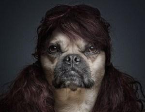 ¿Estos perros tienen estilo o qué? (Fotos)